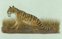 Thylacosmilus Atrox Fine Art Print