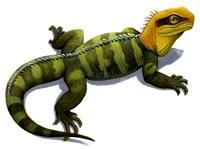 Clevosaurus Fine Art Print