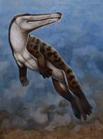 Ambulocetus Natans Fine Art Print