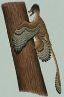 Microraptor Gui Fine Art Print