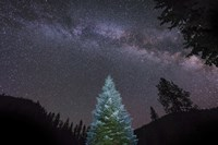 Pine Tree Glows Under the Arch of the Milky Way Fine Art Print