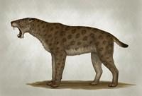 Homotherium Latidens Fine Art Print