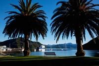 Picton, Marlborough, South Island, New Zealand Fine Art Print