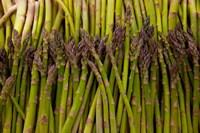 Scotts asparagus farm, Marlborough, South Island, New Zealand Fine Art Print
