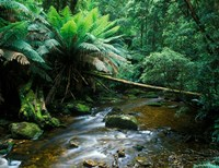 Nelson Creek, Franklin Gordon Wild Rivers National Park, Tasmania, Australia Fine Art Print