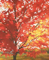 Red Tree Fine Art Print