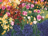 English Tulips Fine Art Print