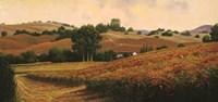 Carneros Vineyards Fine Art Print