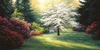 Spring Morning Fine Art Print