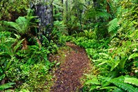 New Zealand, Otago, Old Coach Walking Path, Forest Fine Art Print