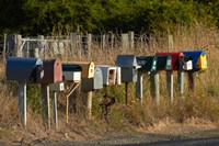 Rural Letterboxes, Otago Peninsula, Dunedin, South Island, New Zealand Fine Art Print