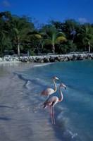 Sonesta Island,  Aruba, Caribbean Fine Art Print
