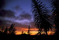 Dunedin, South Island, New Zealand, Trees and sunset Fine Art Print