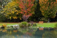 Autumn Color in Hagley Park, Christchurch, Canterbury, New Zealand Fine Art Print