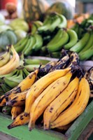 Fresh bananas at the local market in St John's, Antigua Fine Art Print