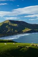 Sheep grazing near Allans Beach, Dunedin, Otago, New Zealand Fine Art Print