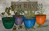 Potted Herbs Fine Art Print