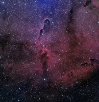 The Elephant Trunk Nebula Fine Art Print