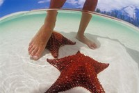 Starfish and Feet, Bahamas, Caribbean Fine Art Print