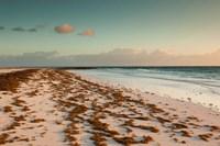 Bahamas, Eleuthera, Harbor Island, Pink Sand Beach with seaweed Fine Art Print