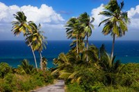Palm trees, Barbados at Bathsheba Fine Art Print