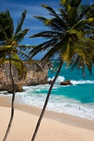 Palm trees, Bottom Bay, Barbados, West Indies Fine Art Print