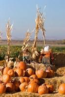 Pumpkin, hay bales, scarecrows, Fruitland, Idaho Fine Art Print
