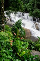Rainforest waterfall, Serra da Bocaina NP, Parati, Brazil (vertical) Fine Art Print