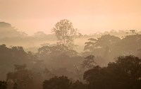 Mist over Canopy, Amazon, Ecuador Fine Art Print