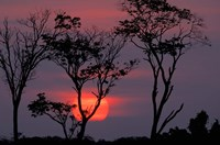 Amazonia Sunset Fine Art Print