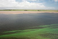 Brazil, Amazon River, Santarem Meeting of the Waters Algae bloom Fine Art Print