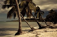 Playa Rincon beach, Las Galeras, Samana Peninsula, Dominican Republic Fine Art Print