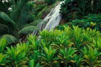Shaw Park Gardens, Jamaica, Caribbean Fine Art Print