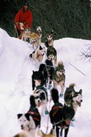Dog Sled Racing in the 1991 Iditarod Sled Race, Alaska, USA Fine Art Print