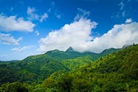 Puerto Rico, El Yunque National Forest, Rainforest Fine Art Print