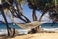 Hammock tied between trees, North Shore beach, St Croix, US Virgin Islands Fine Art Print