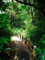 Puerto Rico, Luquillo, El Yunque National Forest path Fine Art Print