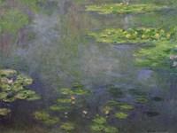 Waterlilies Fine Art Print