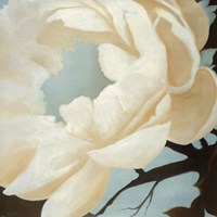 Flora Study Fine Art Print