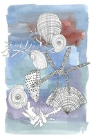 Sea Shell I Fine Art Print