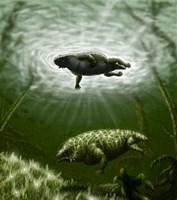 Scutosaurus karpinskii in prehistoric waters Fine Art Print