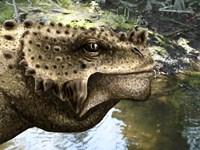 Close-up of the head of a Scutosaurus tuberculatus Fine Art Print