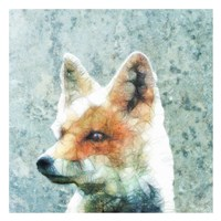 Abstract Fox Fine Art Print