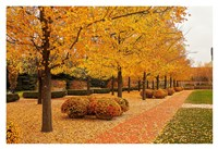 Fall Walkway Fine Art Print