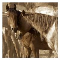 Horses Amour Fine Art Print