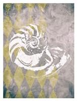 Vintage Harlequin Shell 1 Fine Art Print