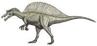 An Albino Spinosaurus Fine Art Print