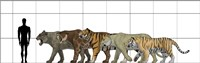 Big Felines Size Chart Fine Art Print