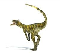 Herrerasaurus dinosaur on white background Fine Art Print