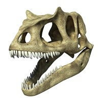 3D Rendering of an Allosaurus Skull Fine Art Print